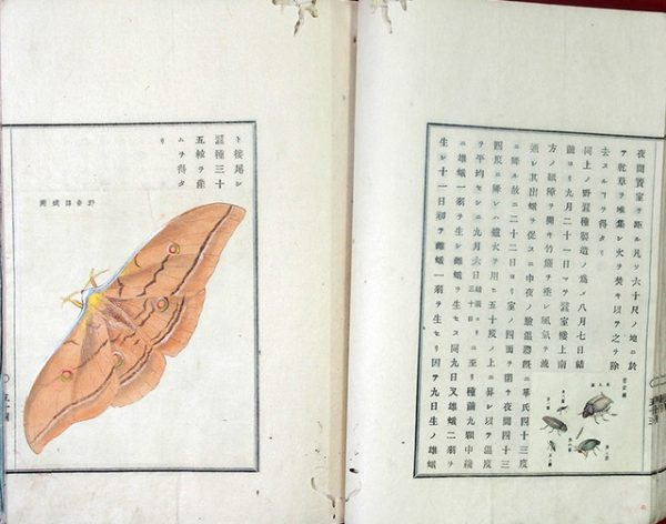 03-203 開拓使本庁蚕織報文02 in 臥遊堂沽価書目「所好」三号