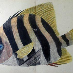 03-208 南海魚譜01 in 臥遊堂沽価書目「所好」三号