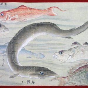 彩色魚類図(02-024/25331)
