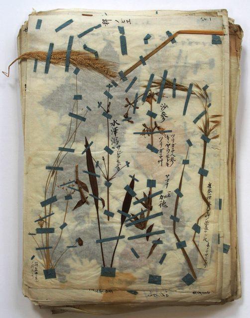 本草標本-1624a