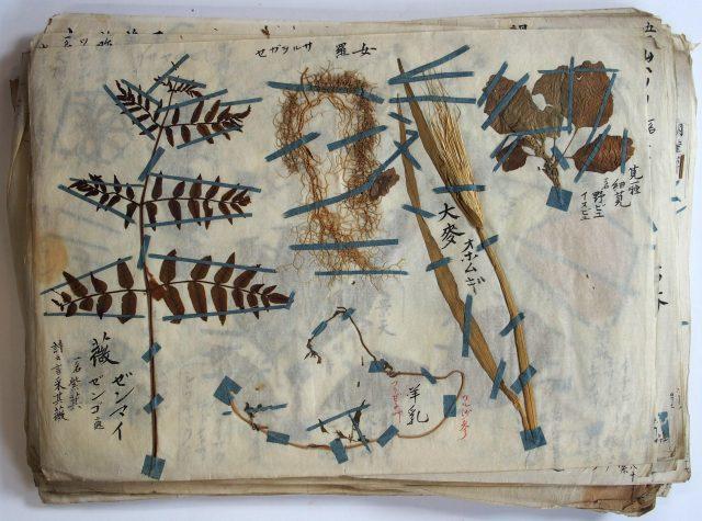 本草標本-1624c